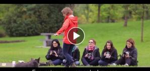 video-exc-mouvement